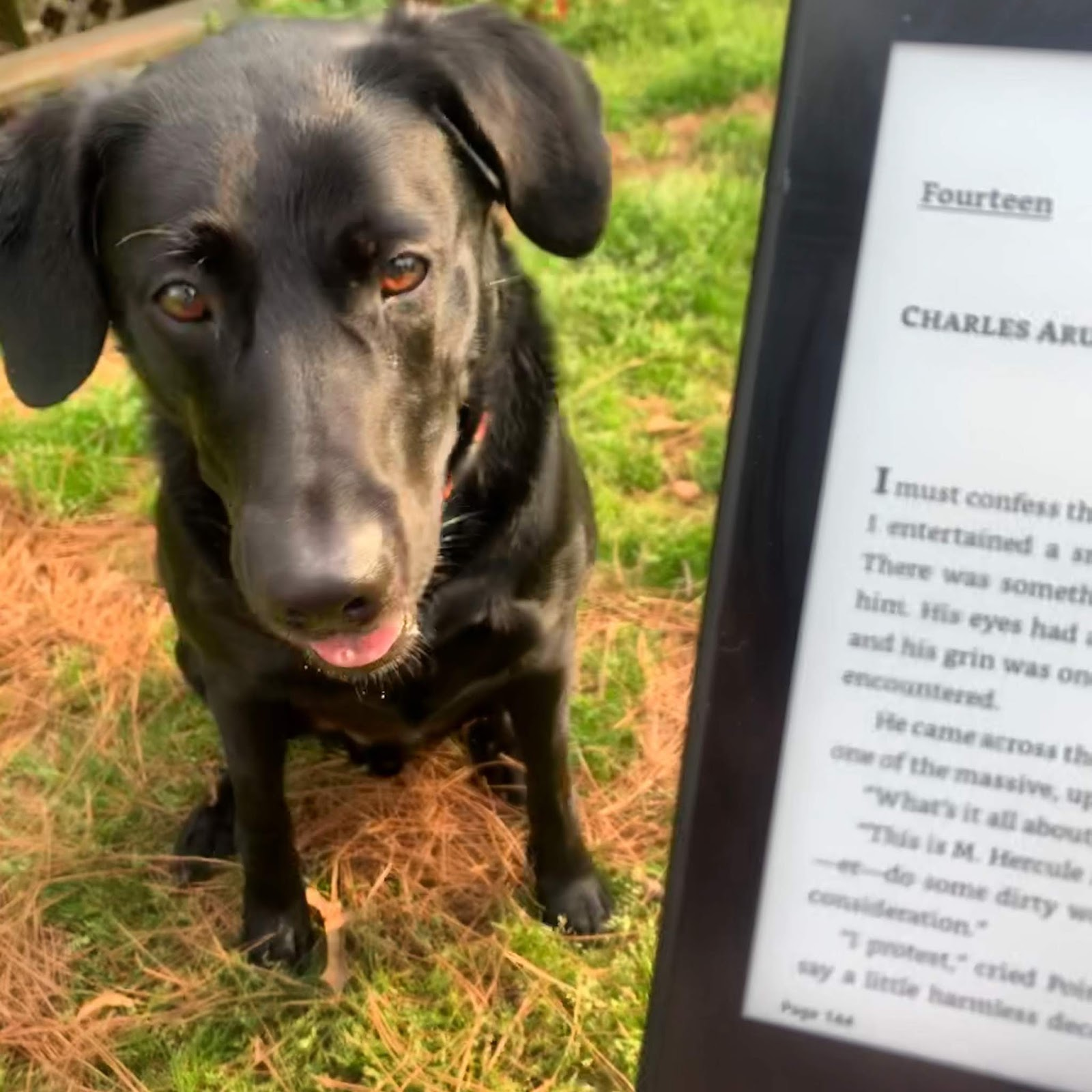 Albus, a black lab, is staring directly at the camera. A slightly out of focus e-reader shows the first page of chapter fourteen