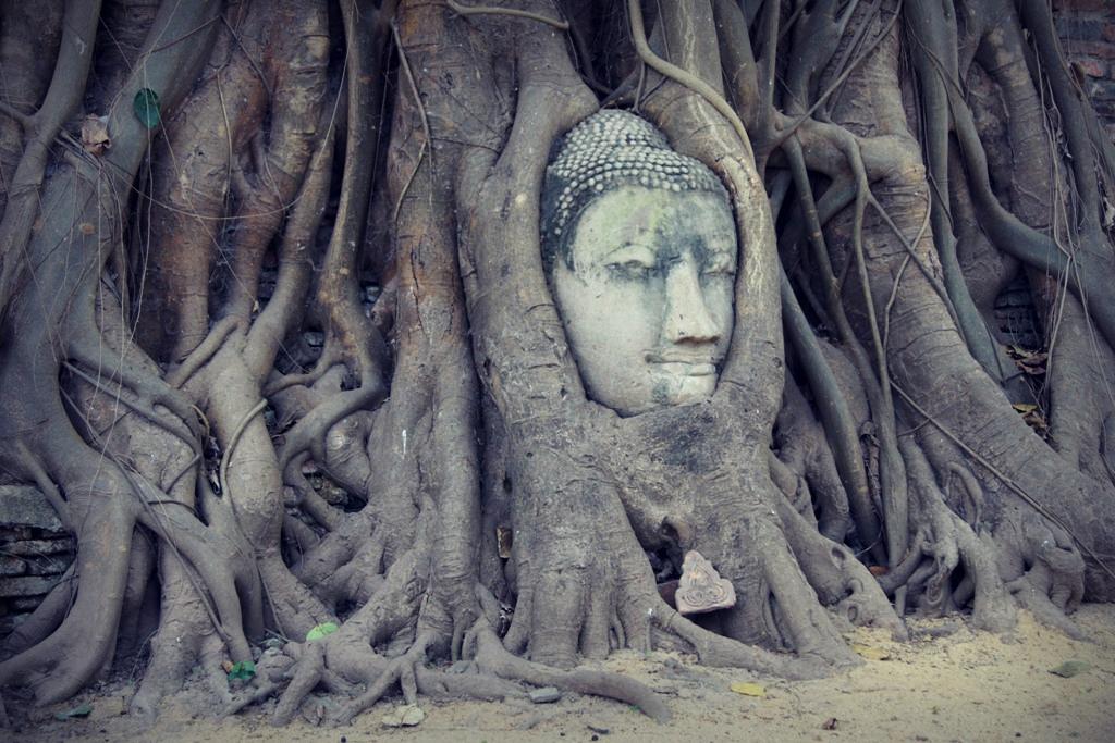 Tajemniczy posąg - otulony Budda