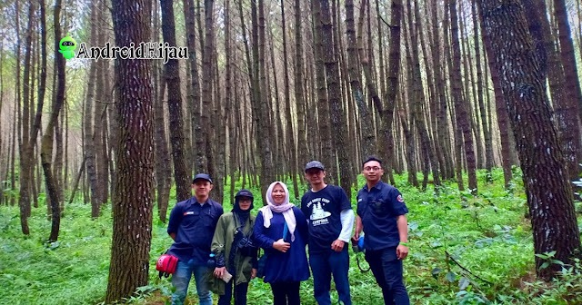 Kawasan Hutan Pinus di Pine Forest Camp Lembang