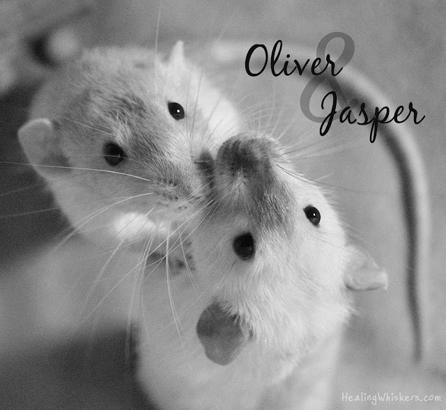 Saying Goodbye to Oliver & Jasper