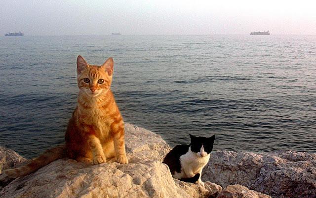 gatitos tiernos y lindos, teamoimagenes.com