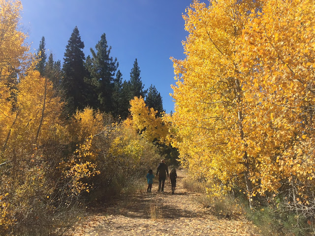 Lake-Tahoe-Aspen-Trees-Fall-Family-Exploring-Road-Trip