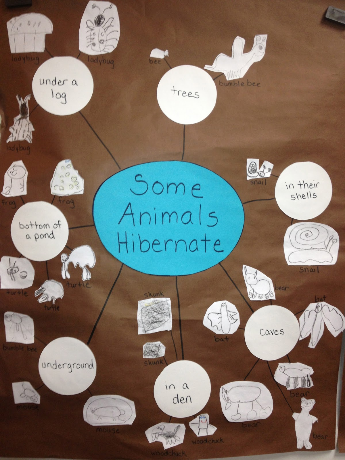 Inquiring Minds Mrs Myers Kindergarten Animals In Winter Inquiry The Investigation Phase