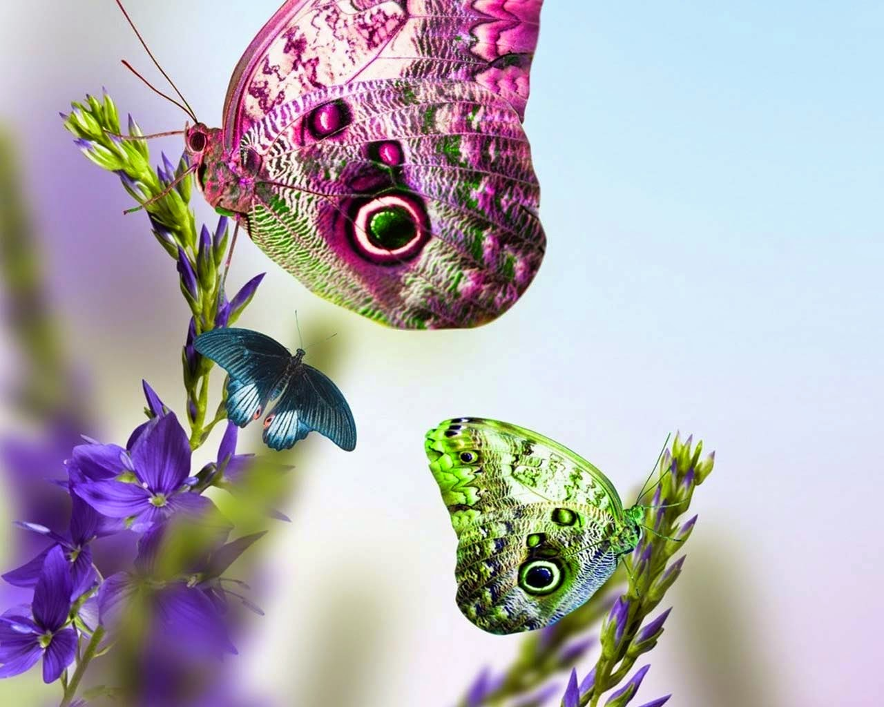 gambar-gambar-kupu-kupu berwarna-warni