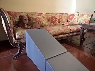 daschund no sofá