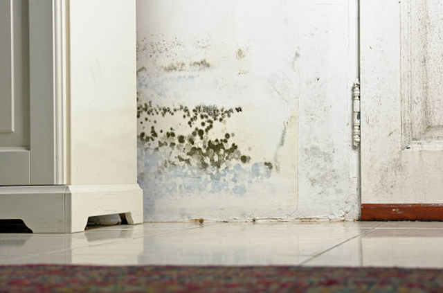 Various Health Problems That May Arise If Your Home Wall Is Moldy