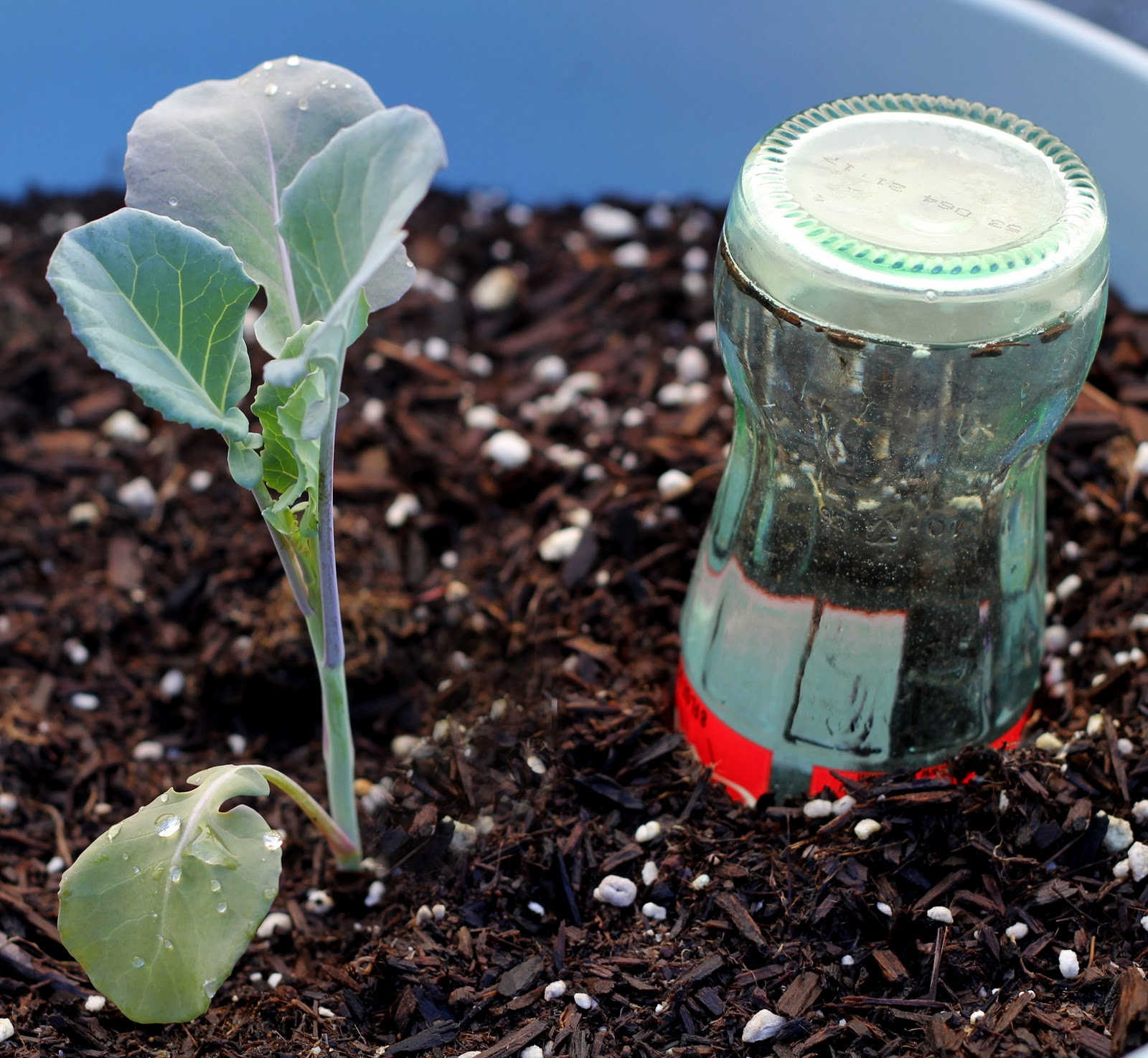 Pack of 2 Fill And Push Into The Soil To Water Plants Aqua Globes