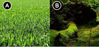 Which green is more saturated?