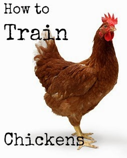 https://proverbsthirtyonewoman.blogspot.com/2012/07/how-to-train-chickens-and-get-them-to.html