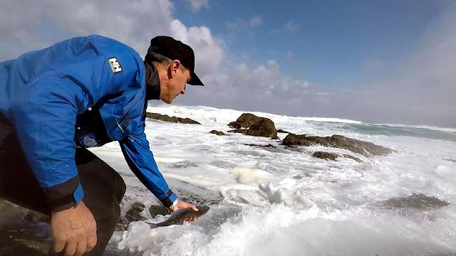 SUELTA - Buscando lubinas en distintos escenarios de pesca