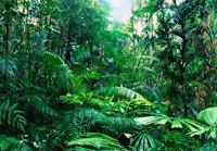 Pengertian Hutan, Fungsi, Bagian, Jenis, dan Hutan di Indonesia