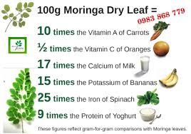 10 Lợi ích tuyệt vời khi uống Bột cây chùm ngây mỗi ngày