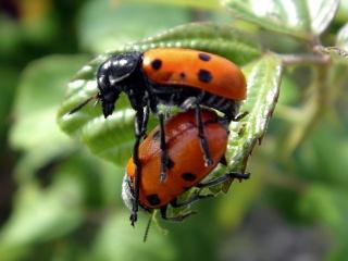 Resultado de imagen para reproduccion de los insectos
