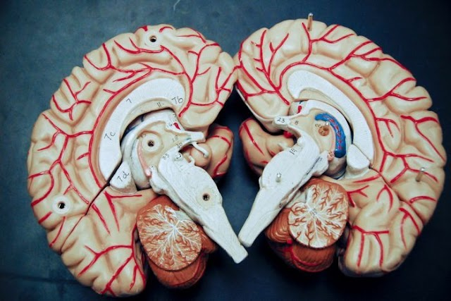 هل تعلم أن الشكوى المستمرة تغير دماغك؟