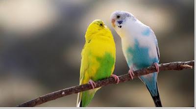 Burung dan ciri - ciri burung - berbagaireviews.com