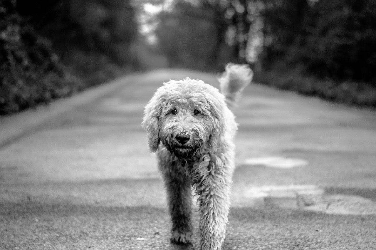 Guest Contributors to Companion Animal Psychology