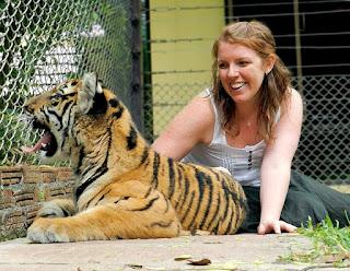 Tiger Kingdom vs Tiger Temple: Yawning tiger