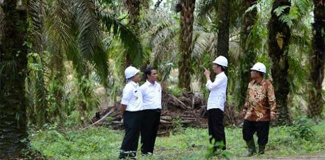 Alokasi Dana Sawit Jokowi Hanya Akal-akalan, Tidak Berdampak Kepada Petani