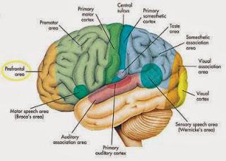 Kanker merupakan sebuah penyakit yang sangat berbahaya Gejala & Ciri-ciri Kanker Otak Lengkap