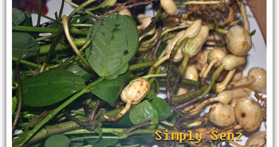 Foods Chinese Medicine
