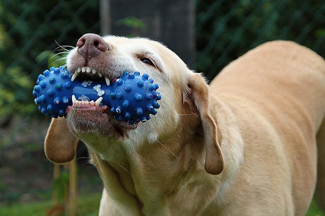 flipping dog toy