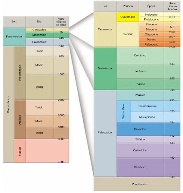 La escala del tiempo geológico subdivide los 4.600 millones de años que tiene de historia el planeta Tierra, la cual proporciona una estructura temporal significativa donde se describen los acontecimientos del pasado geológico.
