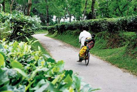 Mamata brews plan for tea families