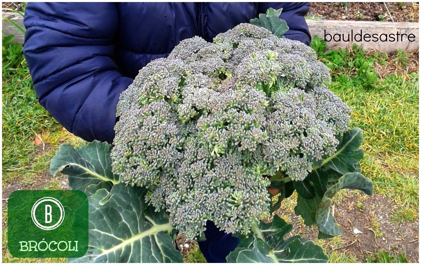 B de brócoli
