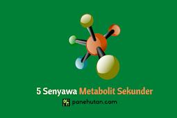 5 Senyawa Metabolit Sekunder