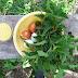 Рецепт весняного кохання: смачнісенькі котлетки з кропиви