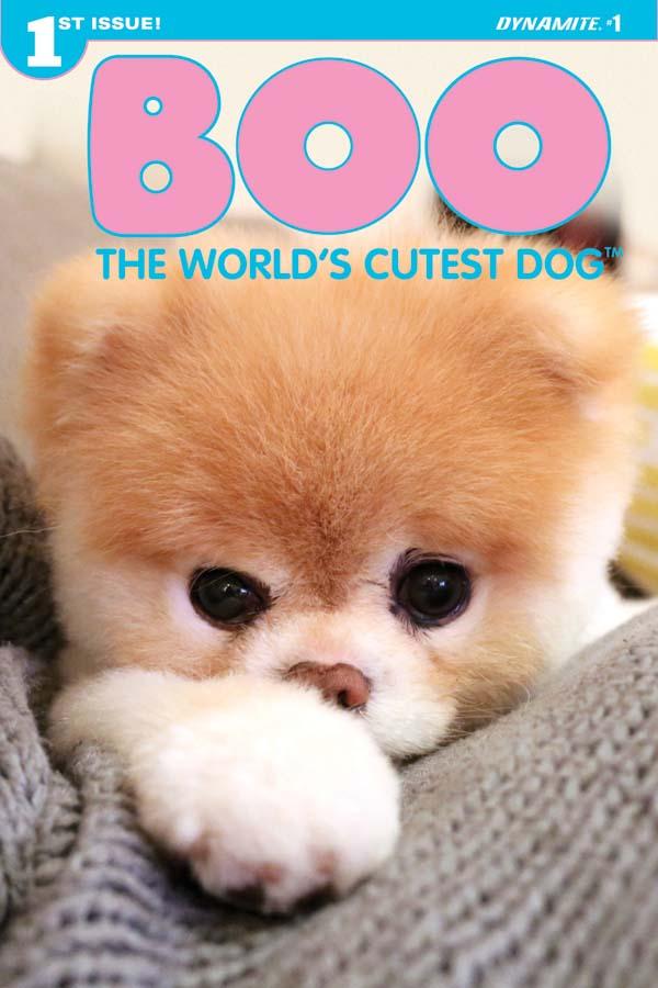 Fantastic Boo Chubby Adorable Dog - Boo2016-01-Cov-E-Photo  Pic_42074  .jpg