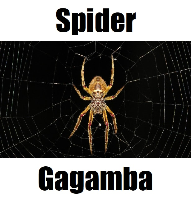 Spider in Tagalog
