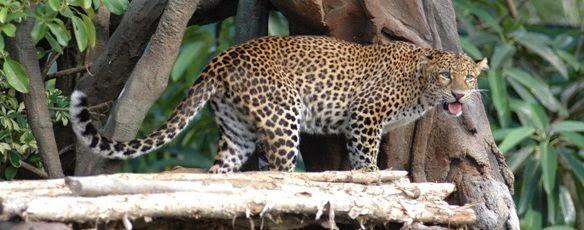 Bali Safari Dan Marine Park - Bali, Liburan, Wisata, Atraksi, Kebun Binatang, Ulasan, Informasi, Penjelasan