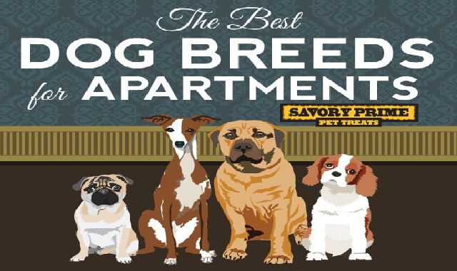 The Best Dog Breeds for Apartment #infographic
