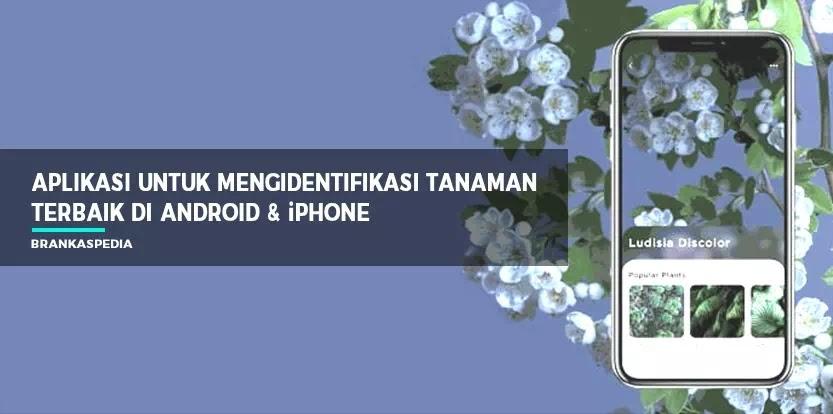 Aplikasi Untuk Mengidentifikasi Tanaman Android Iphone Brankaspedia Blog Tutorial Dan Tips