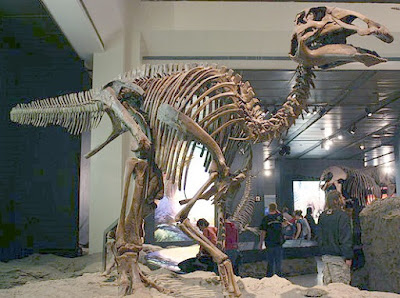 Another fossil does not fit the evolutionary narrative. This dinosaur fossil from Japan supports the Genesis Flood.