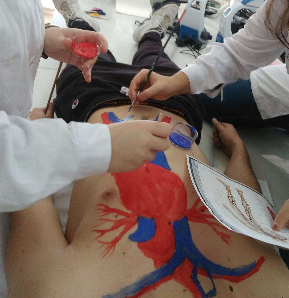 Bodypaint. Venas y Arterias | Anatomia Aplicada. Nerea Pons