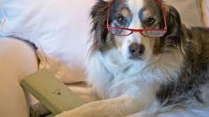 Dolencias comunes al envejecimiento de los perros