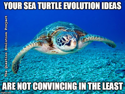 Evolutionists cheer about fossils and claim they have evidence for their beliefs. Recent discoveries such as a ginat turtle fossil are hailed, but are actually nothing.