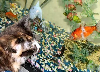 Cat Wth Fish Cat Catching Fish Cat Proof Fish Tank