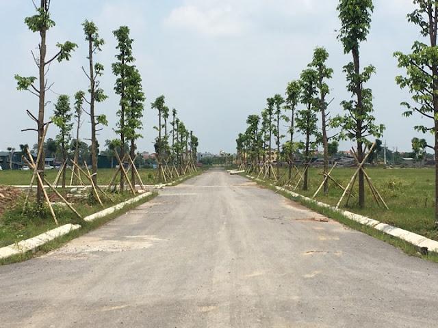 Hạ tầng cây xanh đô thị trong nội khu đô thị Thanh Hà Cienco5 Hà Đông