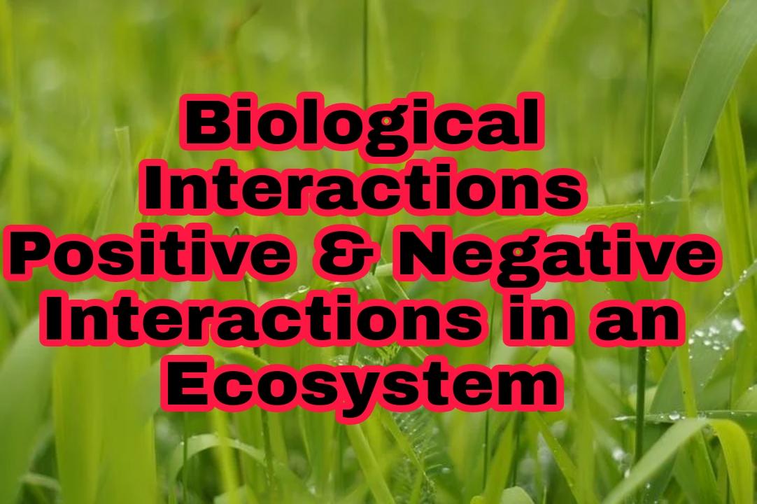 Interaction between assemblies, positive interactions, negative interactions, full information