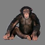 monkey in spanish