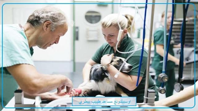 اوسبيلدونغ بيطري Tiermedizinischer Fachangestellter