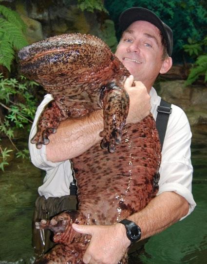 Salamandra gigante da China - Andrias davidianus - Perigo crítico ...