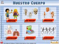 http://www.vedoque.com/juegos/juego.php?j=El-Cuerpo&l=es