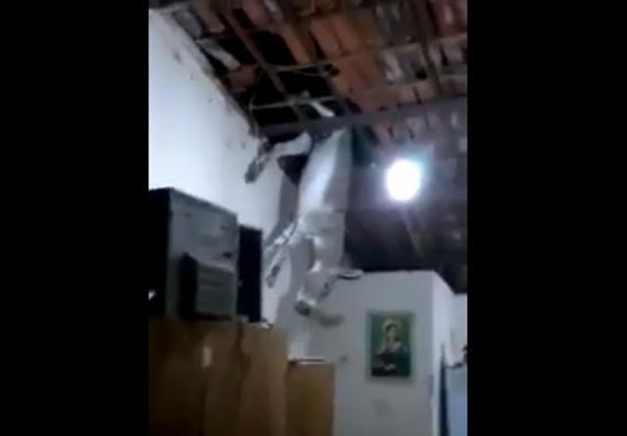 Jumento fica preso em telhado de casa na Paraíba