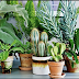 These 6 Indoor Plants Putting Inside Your Home Can Purify the Air and Remove the Toxins