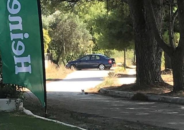 Ηγουμενίτσα: Ακόμα ένα αμάξι στον ποδηλατόδρομο (+ΦΩΤΟ)