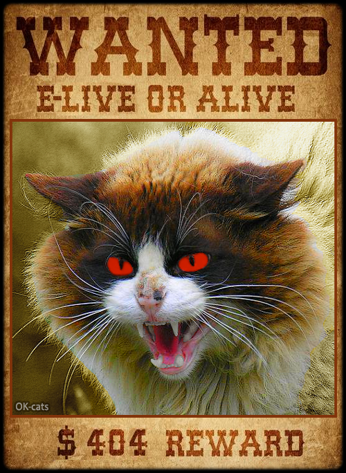 Photoshopped Cat picture • Dangerous cat on the Internet! WANTED e-live or alive. $404 REWARD